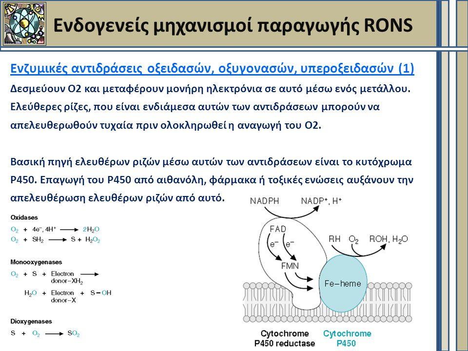 Ενδογενείς μηχανισμοί παραγωγής RONS Ενζυμικές αντιδράσεις οξειδασών, οξυγονασών, υπεροξειδασών (1) Δεσμεύουν Ο2 και μεταφέρουν μονήρη ηλεκτρόνια σε αυτό μέσω ενός μετάλλου.
