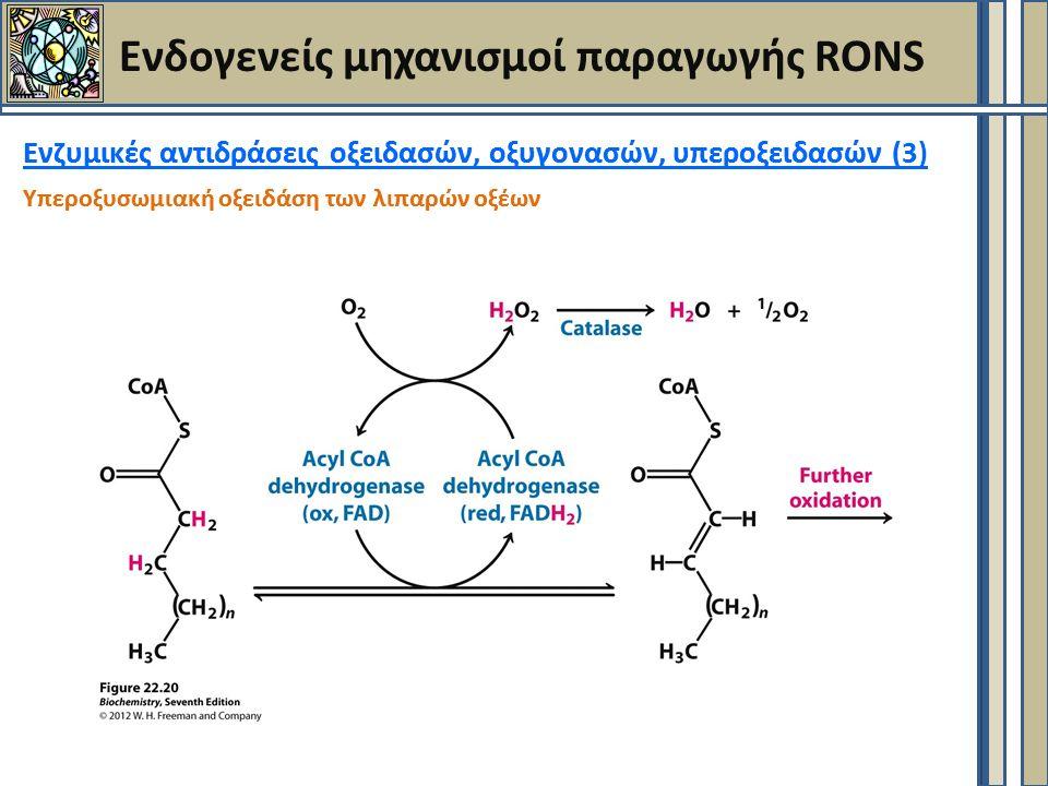 Ενζυμικές αντιδράσεις οξειδασών, οξυγονασών, υπεροξειδασών (3) Υπεροξυσωμιακή οξειδάση των λιπαρών οξέων Ενδογενείς μηχανισμοί παραγωγής RONS Ενζυμικές αντιδράσεις οξειδασών, οξυγονασών, υπεροξειδασών ( Υπεροξυσωμιακή οξειδάση των λιπαρών οξέων