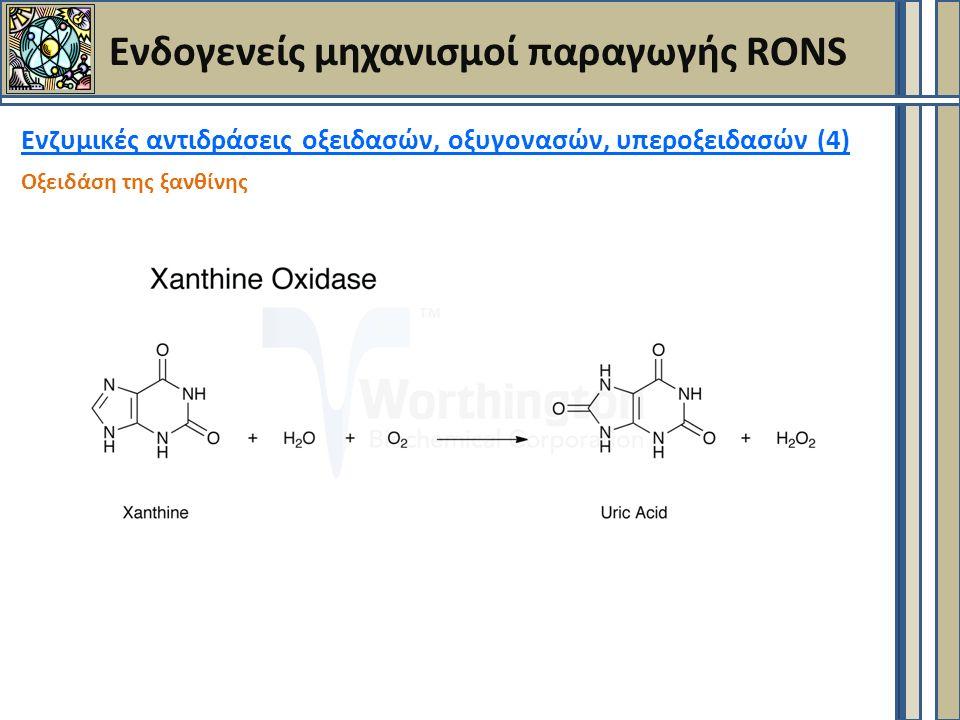 Ενδογενείς μηχανισμοί παραγωγής RONS Ενζυμικές αντιδράσεις οξειδασών, οξυγονασών, υπεροξειδασών (4) Οξειδάση της ξανθίνης