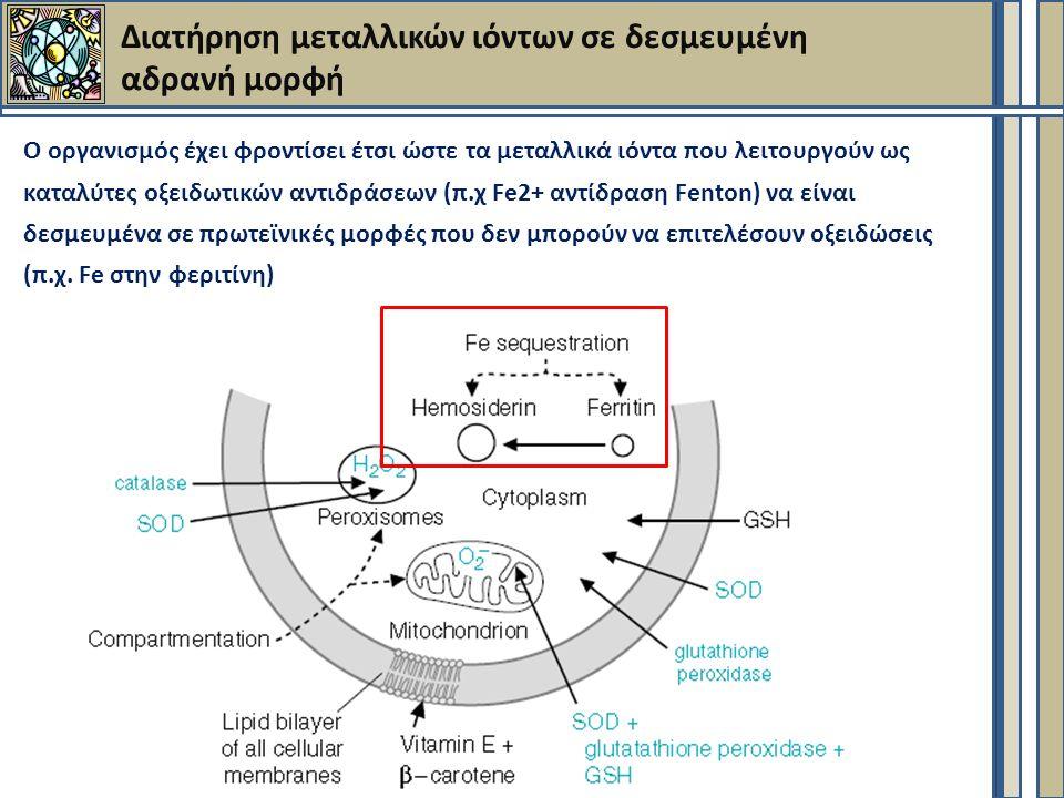 Διατήρηση μεταλλικών ιόντων σε δεσμευμένη αδρανή μορφή Ο οργανισμός έχει φροντίσει έτσι ώστε τα μεταλλικά ιόντα που λειτουργούν ως καταλύτες οξειδωτικών αντιδράσεων (π.χ Fe2+ αντίδραση Fenton) να είναι δεσμευμένα σε πρωτεϊνικές μορφές που δεν μπορούν να επιτελέσουν οξειδώσεις (π.χ.