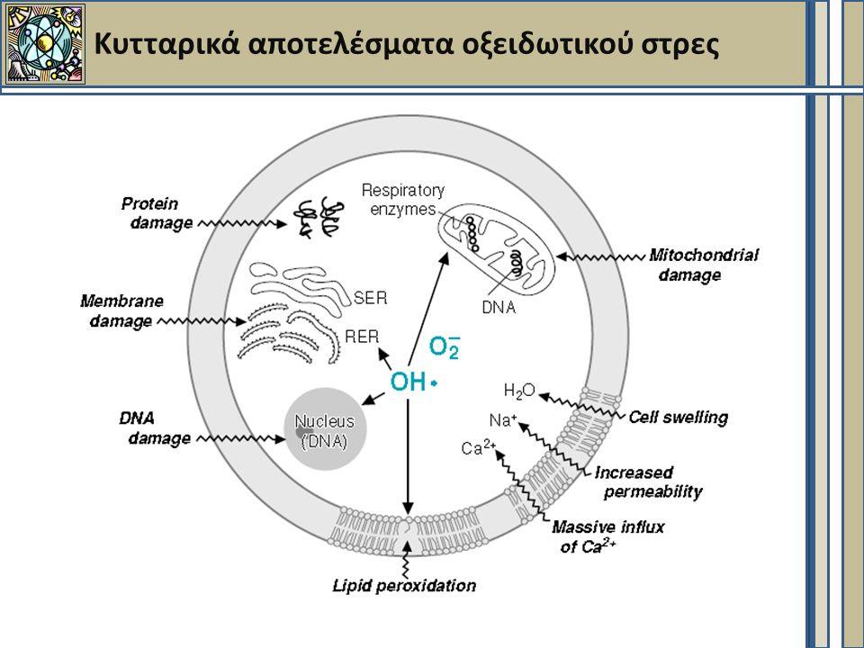 Κυτταρικά αποτελέσματα οξειδωτικού στρες