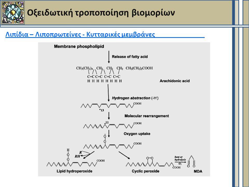 Οξειδωτική τροποποίηση βιομορίων Λιπίδια – Λιποπρωτείνες - Κυτταρικές μεμβράνες