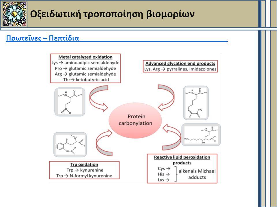 Οξειδωτική τροποποίηση βιομορίων Πρωτεΐνες – Πεπτίδια