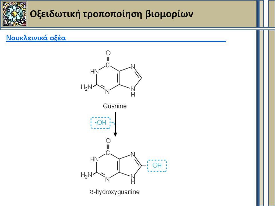 Οξειδωτική τροποποίηση βιομορίων Νουκλεινικά οξέα