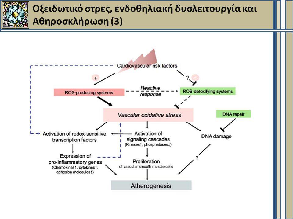 Oξειδωτικό στρες, ενδοθηλιακή δυσλειτουργία και Αθηροσκλήρωση (3)