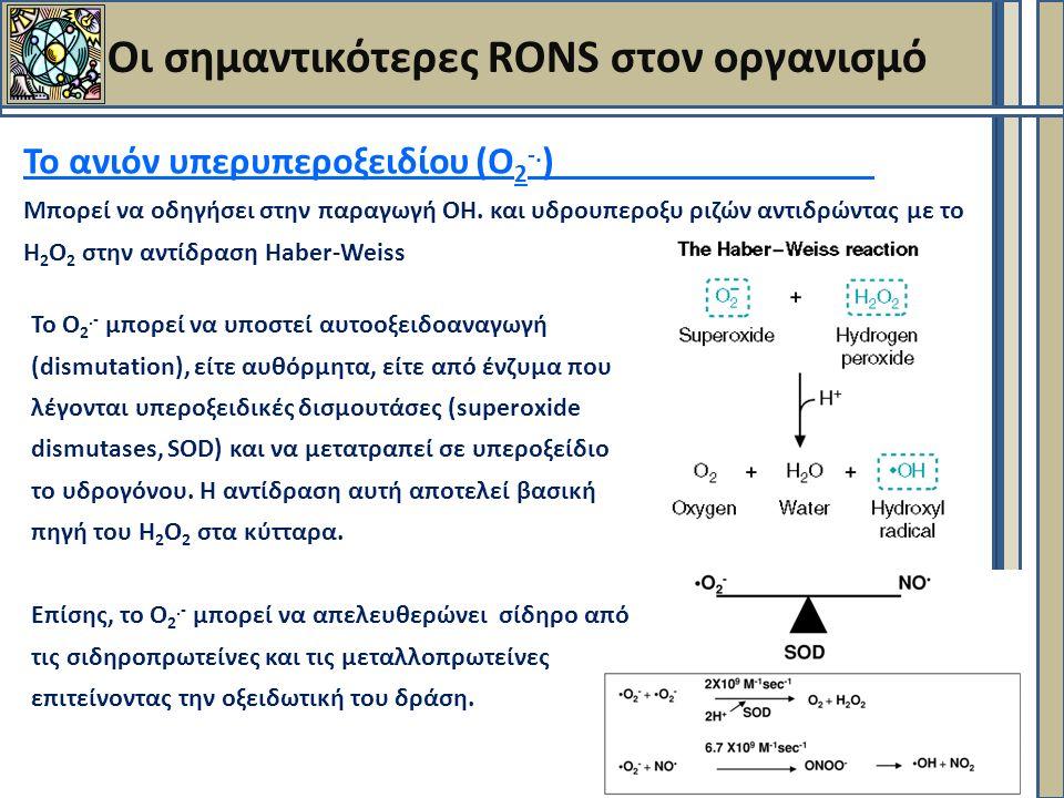 Οι σημαντικότερες RONS στον οργανισμό Το ανιόν υπερυπεροξειδίου (Ο 2 -.
