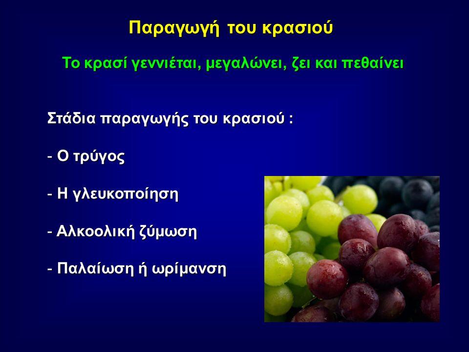 Παραγωγή του κρασιού Το κρασί γεννιέται, μεγαλώνει, ζει και πεθαίνει Στάδια παραγωγής του κρασιού : - Ο τρύγος - Η γλευκοποίηση - Αλκοολική ζύμωση - Παλαίωση ή ωρίμανση