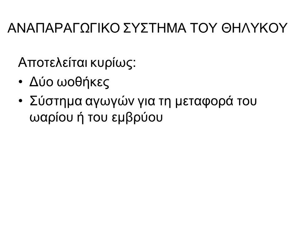 ΓΡΑΦΙΑΝΟ ΩΟΘΥΛΑΚΙΟ