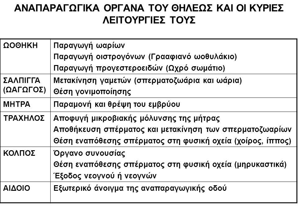 ΓΡΑΑΦΙΑΝΟ ΩΟΘΥΛΑΚΙΟ Έχει μορφή φυσαλίδας στην επιφάνεια της ωοθήκης Είναι γεμάτο από ωοθηκικό υγρό, πλούσιο σε στεροειδείς ορμόνες (κυρίως οιστρογόνα) και άλλους ορμονικούς και μη ορμονικούς παράγοντες ρύθμισης της λειτουργίας της ωοθήκης