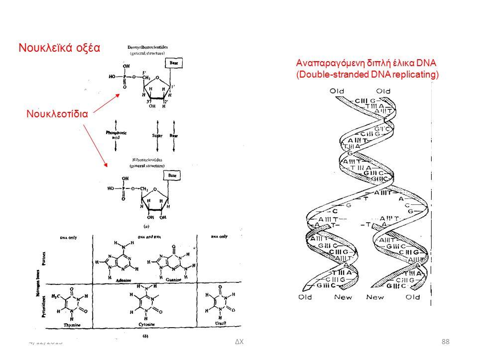 4/12/2015 Νουκλεϊκά οξέα Νουκλεοτίδια Αναπαραγόμενη διπλή έλικα DNA (Double-stranded DNA replicating) ΔΧ88