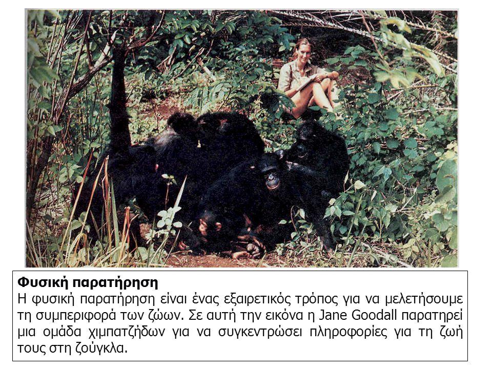 Φυσική παρατήρηση Η φυσική παρατήρηση είναι ένας εξαιρετικός τρόπος για να μελετήσουμε τη συμπεριφορά των ζώων.