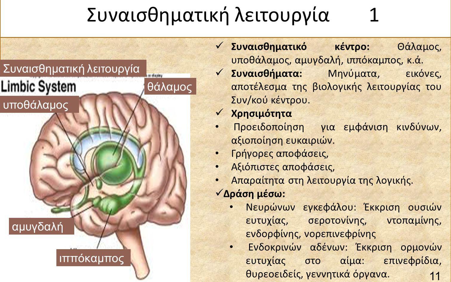 Συναισθηματική λειτουργία θάλαμος αμυγδαλή υποθάλαμος ιππόκαμπος Συναισθηματικό κέντρο: Θάλαμος, υποθάλαμος, αμυγδαλή, ιππόκαμπος, κ.ά.