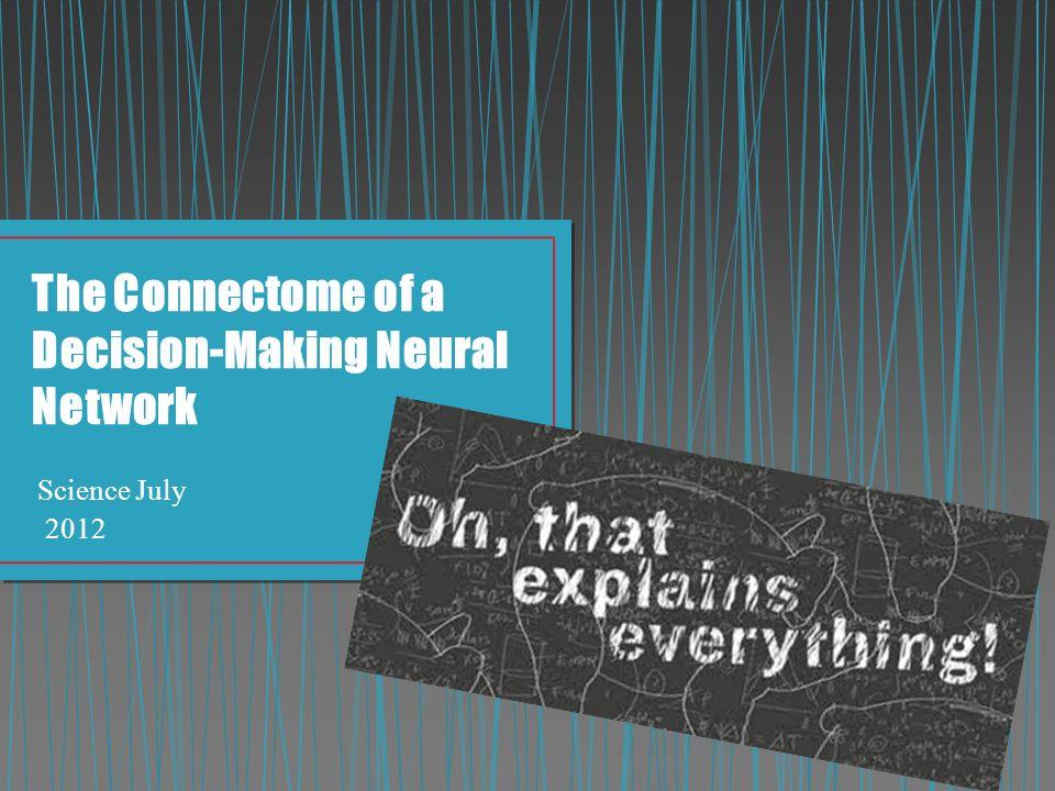 ΤΙ ΘΕΛΕΙ ΝΑ ΠΕΙ Ο ΠΟΙΗΤΗΣ;;;;;;; CONNECTOME: ΔΙΚΤΥΟ ΣΥΝΔΕΣΕΩΝ ΜΕΤΑΞΥ ΤΩΝ ΝΕΥΡΩΝΩΝ ΕΡΕΥΝΑ: ανάλυση της δομής των συνδέσεων μεταξύ των νευρώνων, για τη λήψη συγκεκριμένων αποφάσεων Πειραματόζωο : Caenorhabditis elegans Συμπεριφορά που μελετήθηκε: Αναπαραγωγή