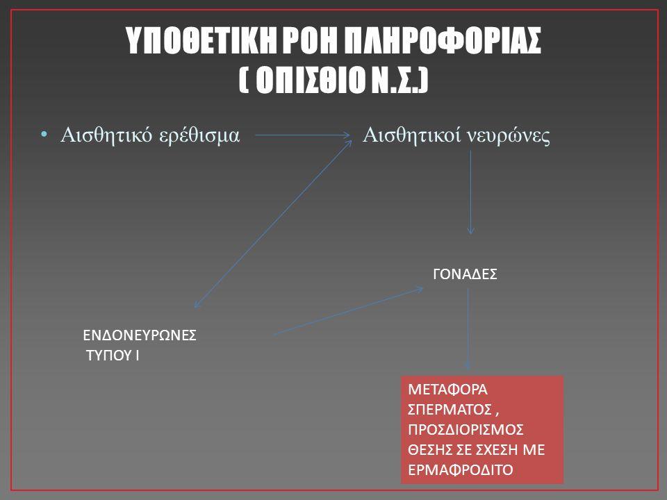 ΥΠΟΘΕΤΙΚΗ ΡΟΗ ΠΛΗΡΟΦΟΡΙΑΣ ( ΟΠΙΣΘΙΟ Ν.Σ.) Αισθητικό ερέθισμα Αισθητικοί νευρώνες ΓΟΝΑΔΕΣ ΕΝΔΟΝΕΥΡΩΝΕΣ ΤΥΠΟΥ Ι ΜΕΤΑΦΟΡΑ ΣΠΕΡΜΑΤΟΣ, ΠΡΟΣΔΙΟΡΙΣΜΟΣ ΘΕΣΗΣ ΣΕ ΣΧΕΣΗ ΜΕ ΕΡΜΑΦΡΟΔΙΤΟ