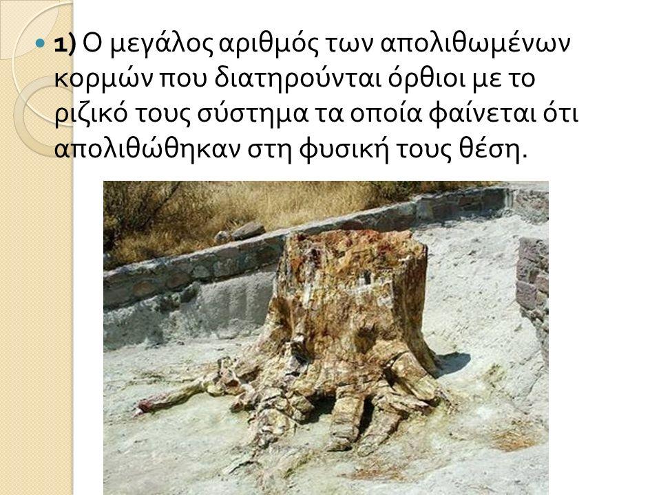 1) Ο μεγάλος αριθμός των απολιθωμένων κορμών που διατηρούνται όρθιοι με το ριζικό τους σύστημα τα οποία φαίνεται ότι απολιθώθηκαν στη φυσική τους θέση.