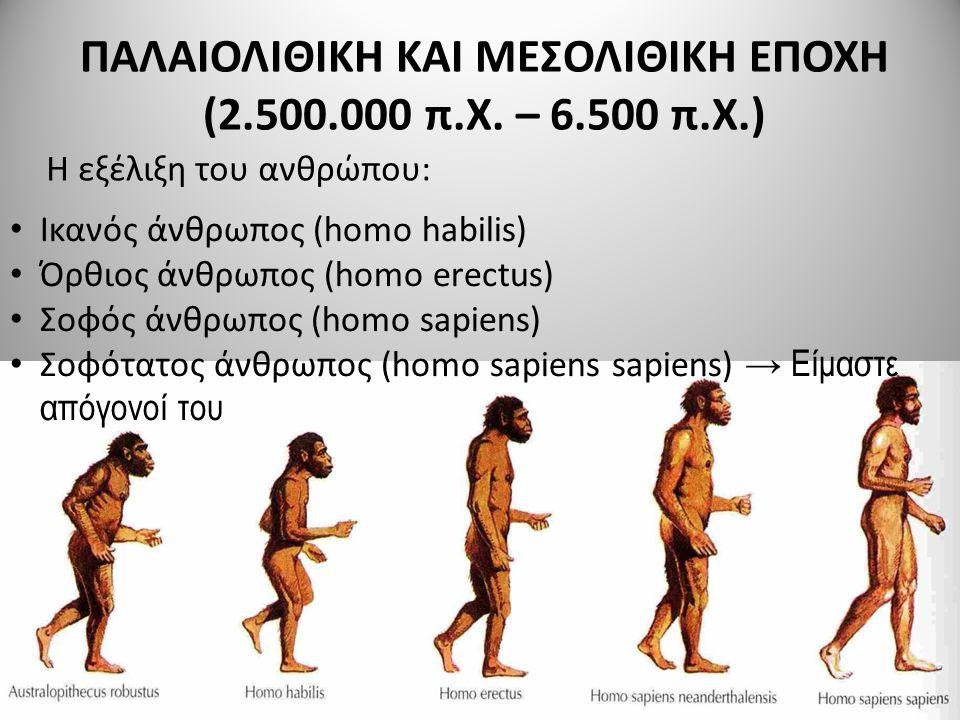 ΠΑΛΑΙΟΛΙΘΙΚΗ ΚΑΙ ΜΕΣΟΛΙΘΙΚΗ ΕΠΟΧΗ (2.500.000 π.Χ. – 6.500 π.Χ.) Η εξέλιξη του ανθρώπου: Ικανός άνθρωπος (homo habilis) Όρθιος άνθρωπος (homo erectus)