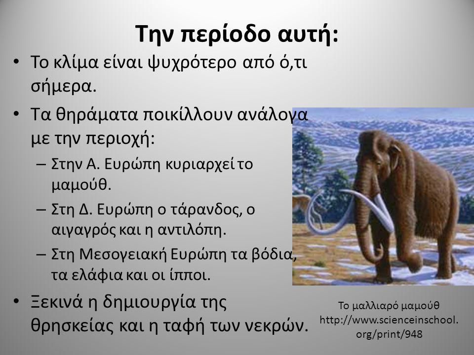 Την περίοδο αυτή: Το κλίμα είναι ψυχρότερο από ό,τι σήμερα. Τα θηράματα ποικίλλουν ανάλογα με την περιοχή: – Στην Α. Ευρώπη κυριαρχεί το μαμούθ. – Στη
