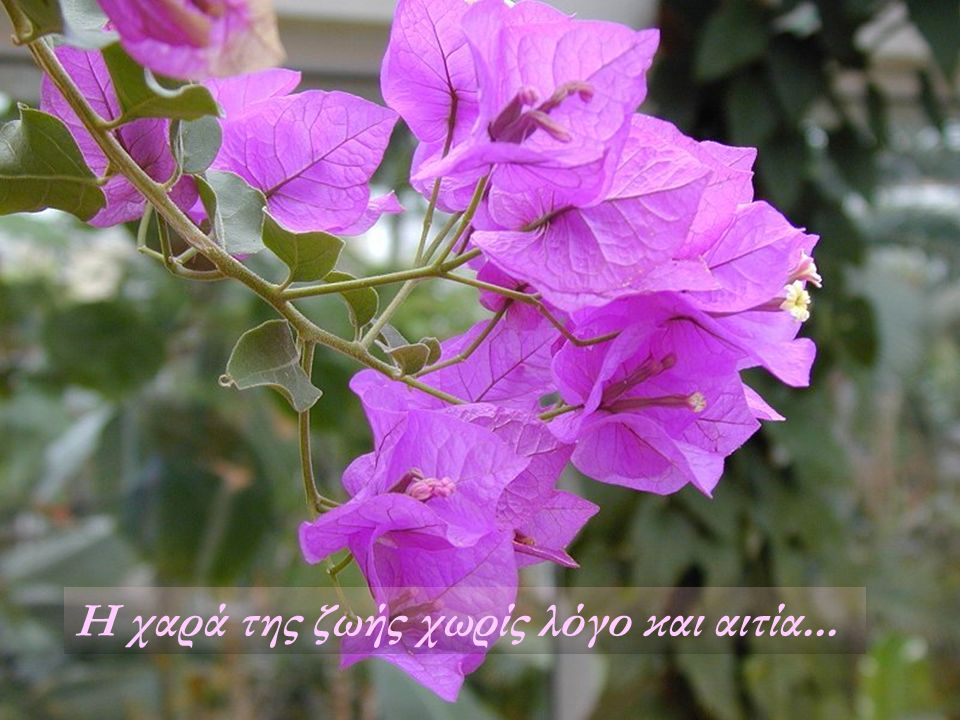 Η χαρά της ζωής χωρίς λόγο και αιτία...