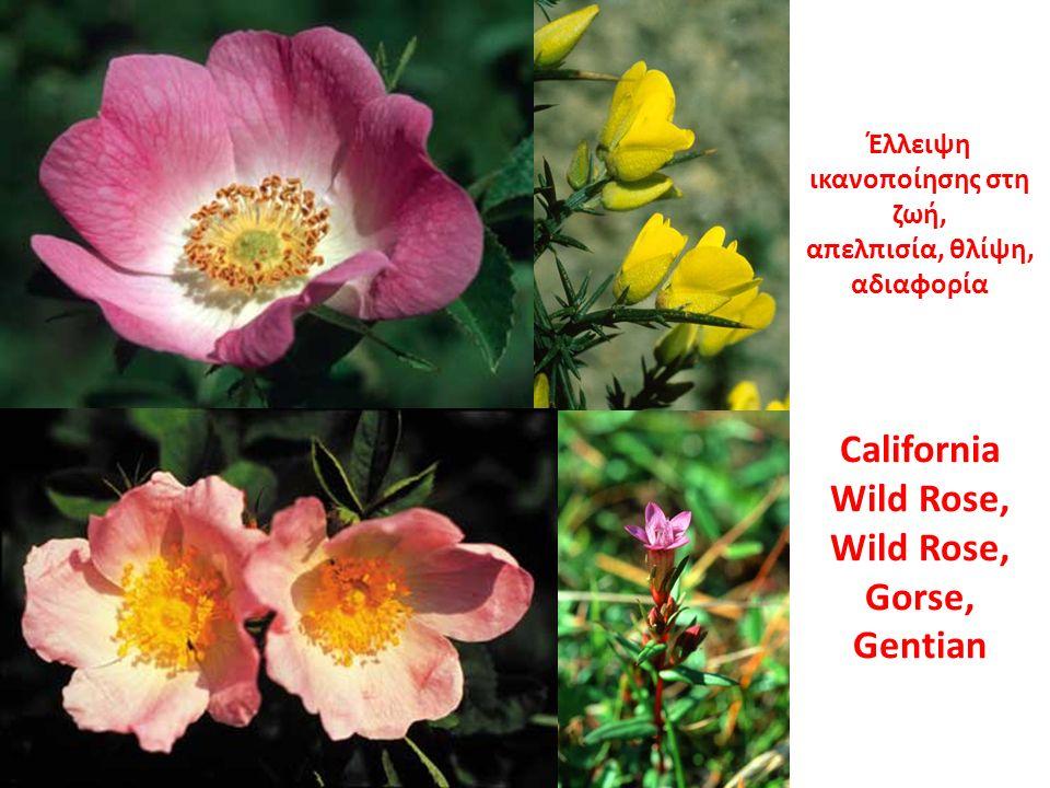 Έλλειψη ικανοποίησης στη ζωή, απελπισία, θλίψη, αδιαφορία California Wild Rose, Wild Rose, Gorse, Gentian