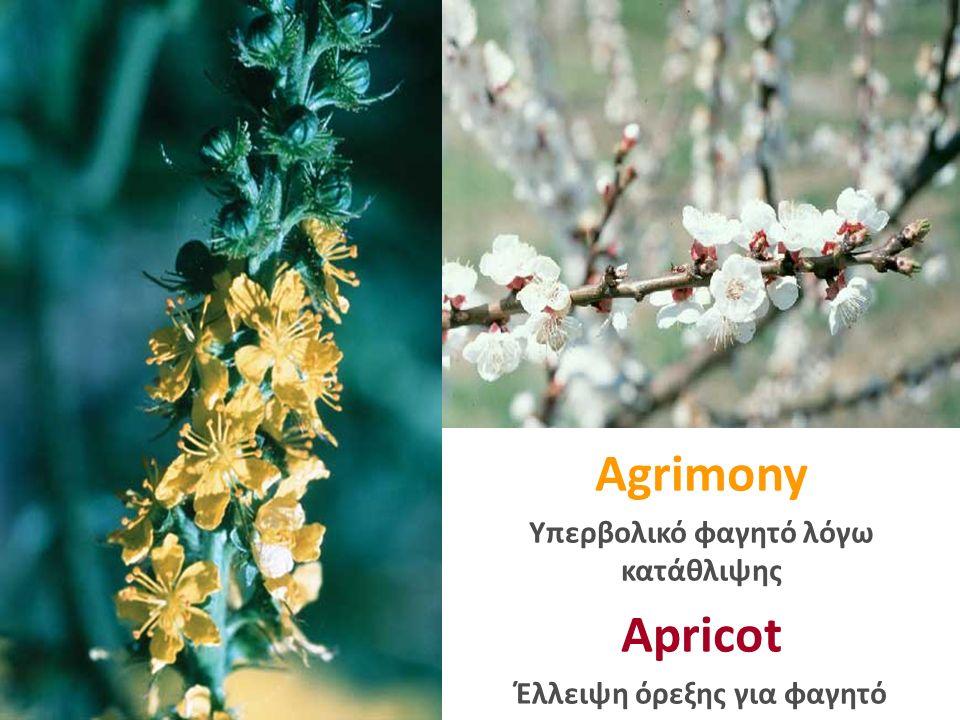 Agrimony Υπερβολικό φαγητό λόγω κατάθλιψης Apricot Έλλειψη όρεξης για φαγητό