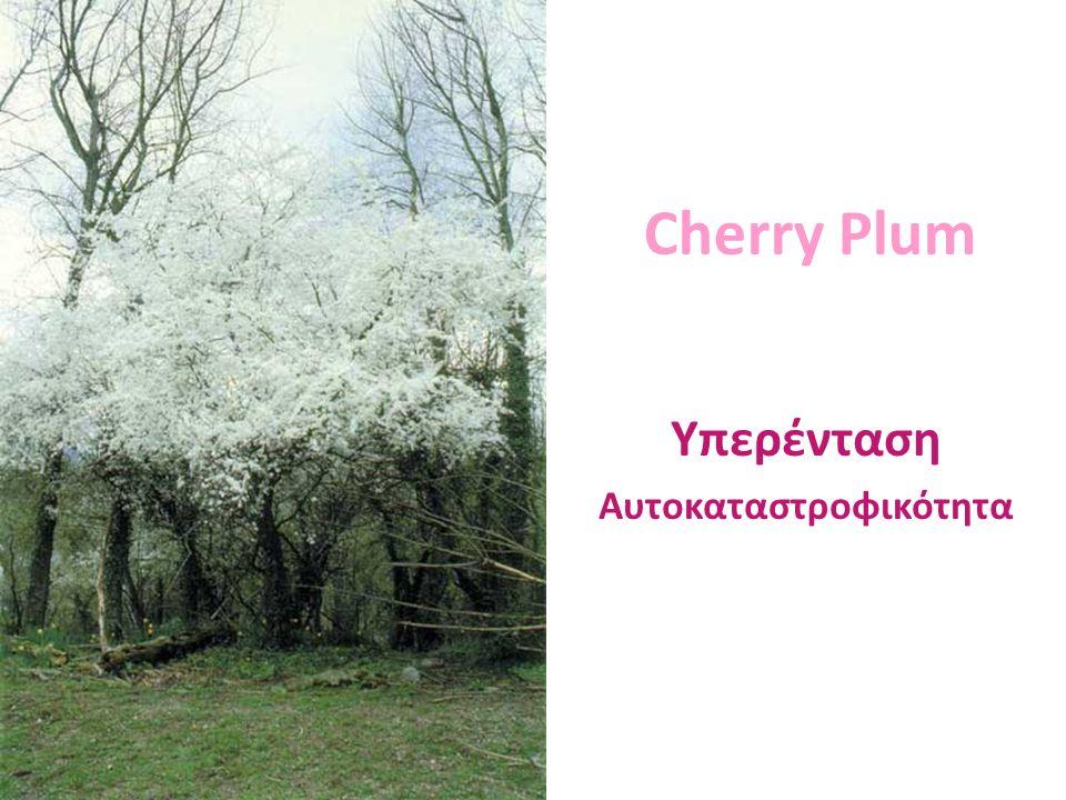 Cherry Plum Υπερένταση Αυτοκαταστροφικότητα