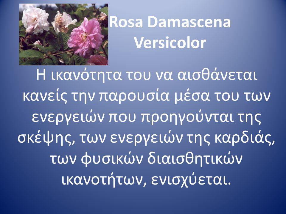Rosa Damascena Versicolor Η ικανότητα του να αισθάνεται κανείς την παρουσία μέσα του των ενεργειών που προηγούνται της σκέψης, των ενεργειών της καρδι