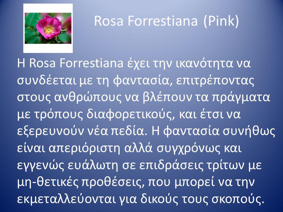 Rosa Forrestiana (Pink) Η Rosa Forrestiana έχει την ικανότητα να συνδέεται με τη φαντασία, επιτρέποντας στους ανθρώπους να βλέπουν τα πράγματα με τρόπ