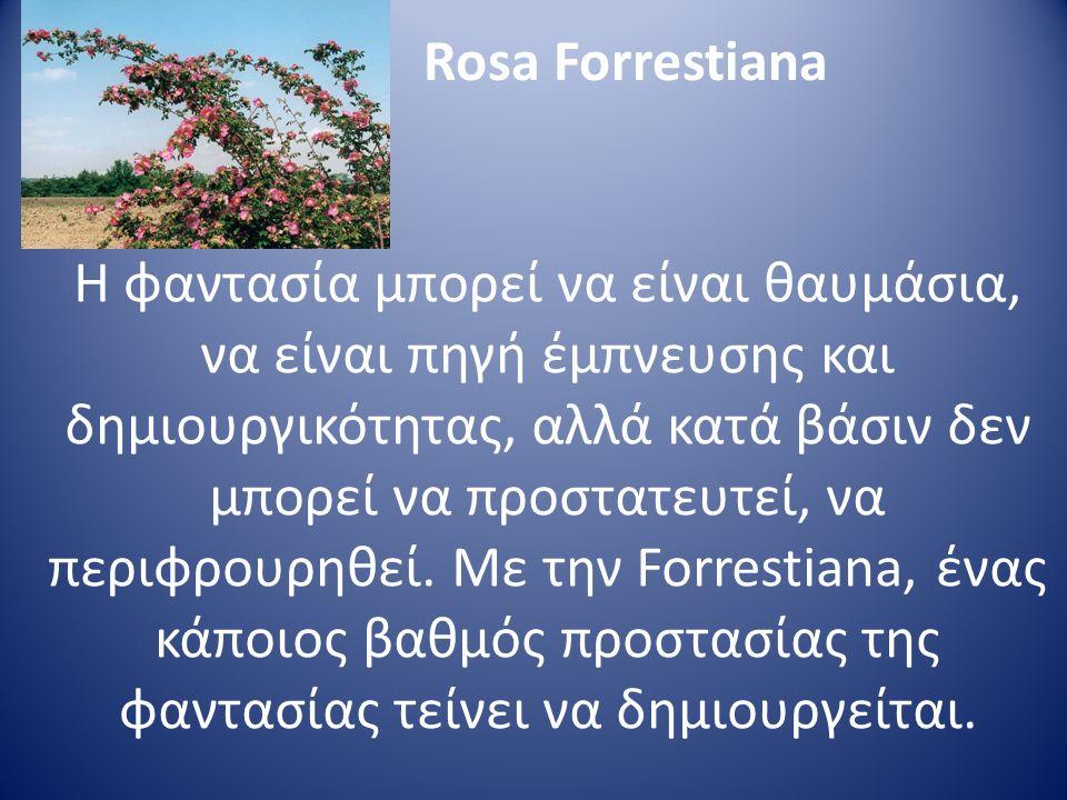 Rosa Forrestiana Η φαντασία μπορεί να είναι θαυμάσια, να είναι πηγή έμπνευσης και δημιουργικότητας, αλλά κατά βάσιν δεν μπορεί να προστατευτεί, να περ