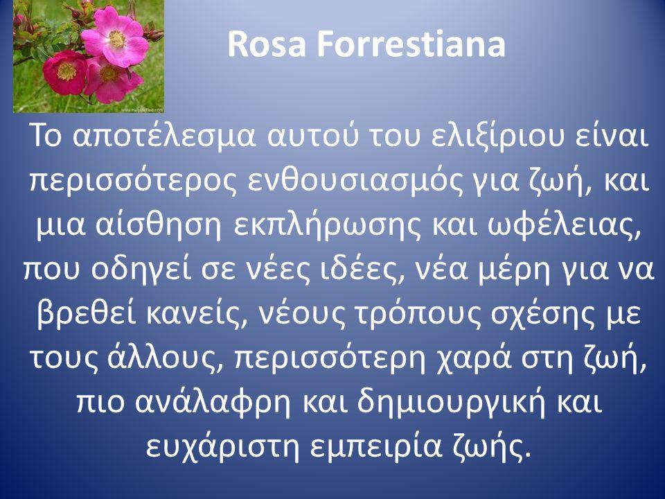 Rosa Forrestiana Το αποτέλεσμα αυτού του ελιξίριου είναι περισσότερος ενθουσιασμός για ζωή, και μια αίσθηση εκπλήρωσης και ωφέλειας, που οδηγεί σε νέε
