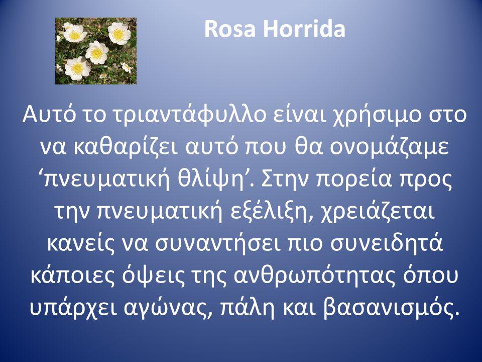 Rosa Horrida Αυτό το τριαντάφυλλο είναι χρήσιμο στο να καθαρίζει αυτό που θα ονομάζαμε 'πνευματική θλίψη'. Στην πορεία προς την πνευματική εξέλιξη, χρ