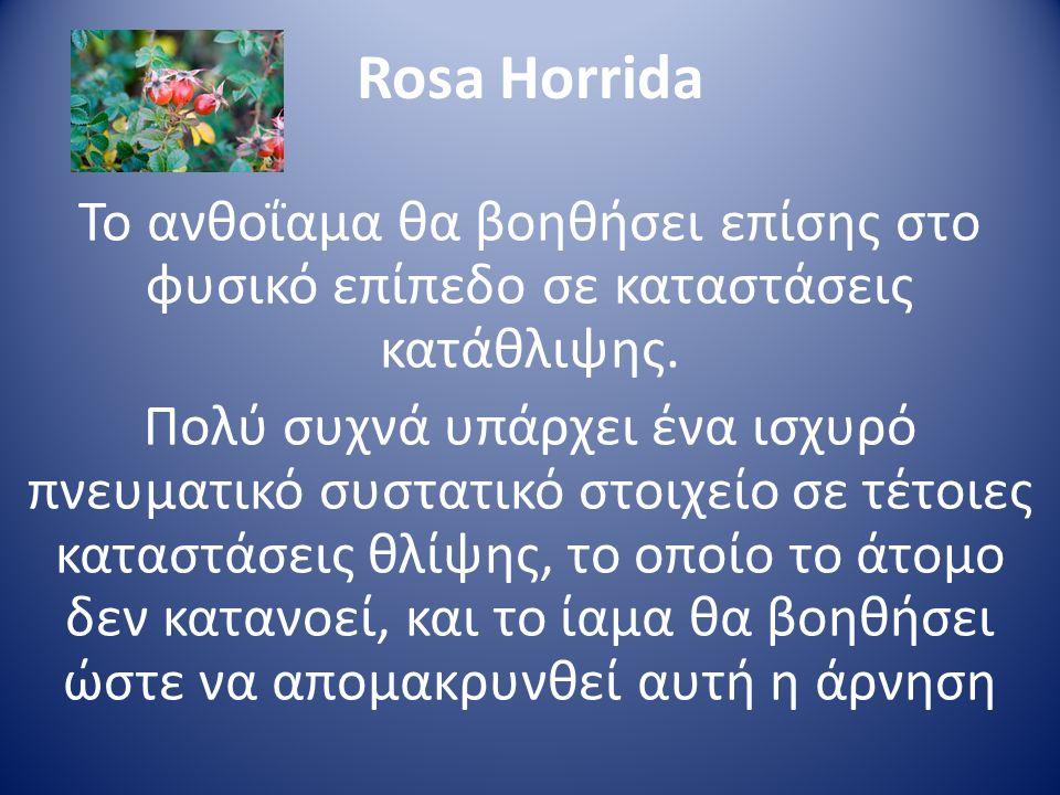 Rosa Horrida Το ανθοΐαμα θα βοηθήσει επίσης στο φυσικό επίπεδο σε καταστάσεις κατάθλιψης. Πολύ συχνά υπάρχει ένα ισχυρό πνευματικό συστατικό στοιχείο