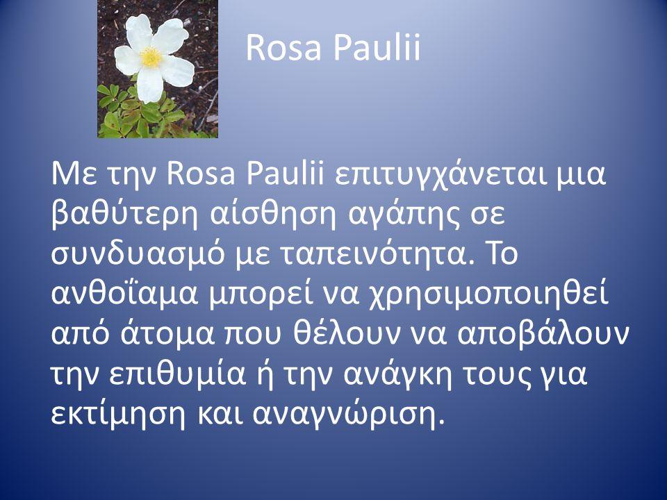 Rosa Paulii Με την Rosa Paulii επιτυγχάνεται μια βαθύτερη αίσθηση αγάπης σε συνδυασμό με ταπεινότητα. Το ανθοΐαμα μπορεί να χρησιμοποιηθεί από άτομα π