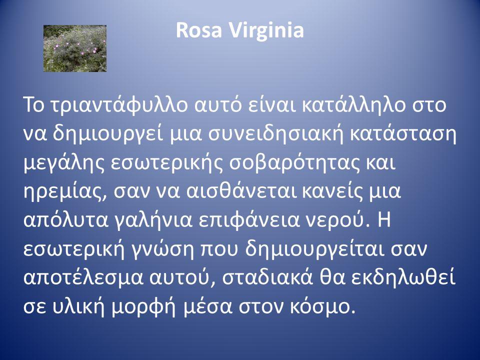 Rosa Virginia Το τριαντάφυλλο αυτό είναι κατάλληλο στο να δημιουργεί μια συνειδησιακή κατάσταση μεγάλης εσωτερικής σοβαρότητας και ηρεμίας, σαν να αισ