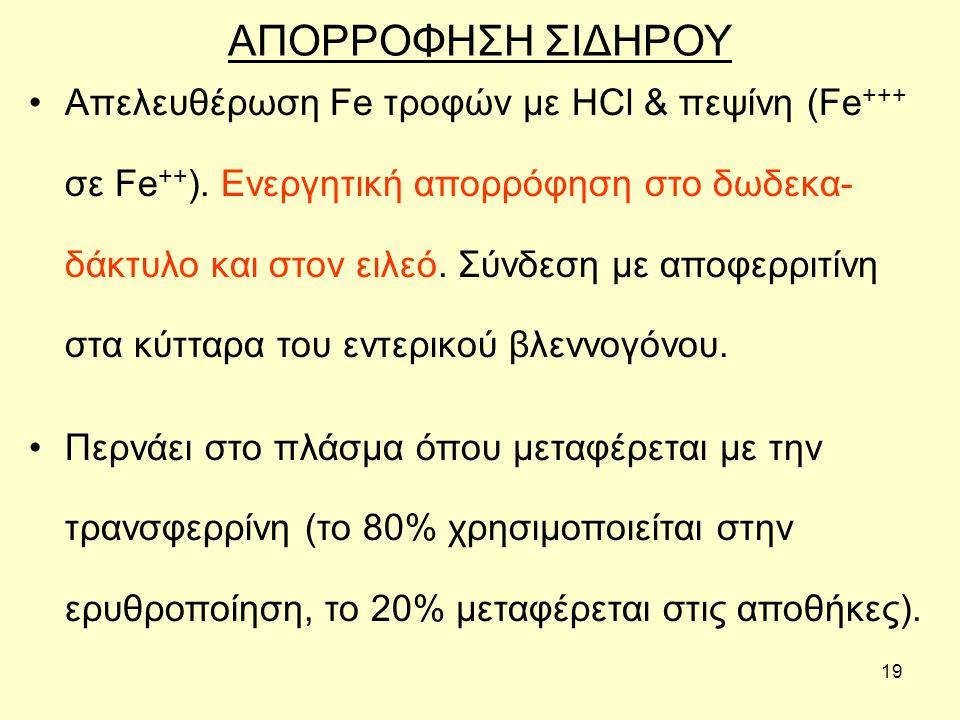 19 ΑΠΟΡΡΟΦΗΣΗ ΣΙΔΗΡΟΥ Απελευθέρωση Fe τροφών με HCl & πεψίνη (Fe +++ σε Fe ++ ).