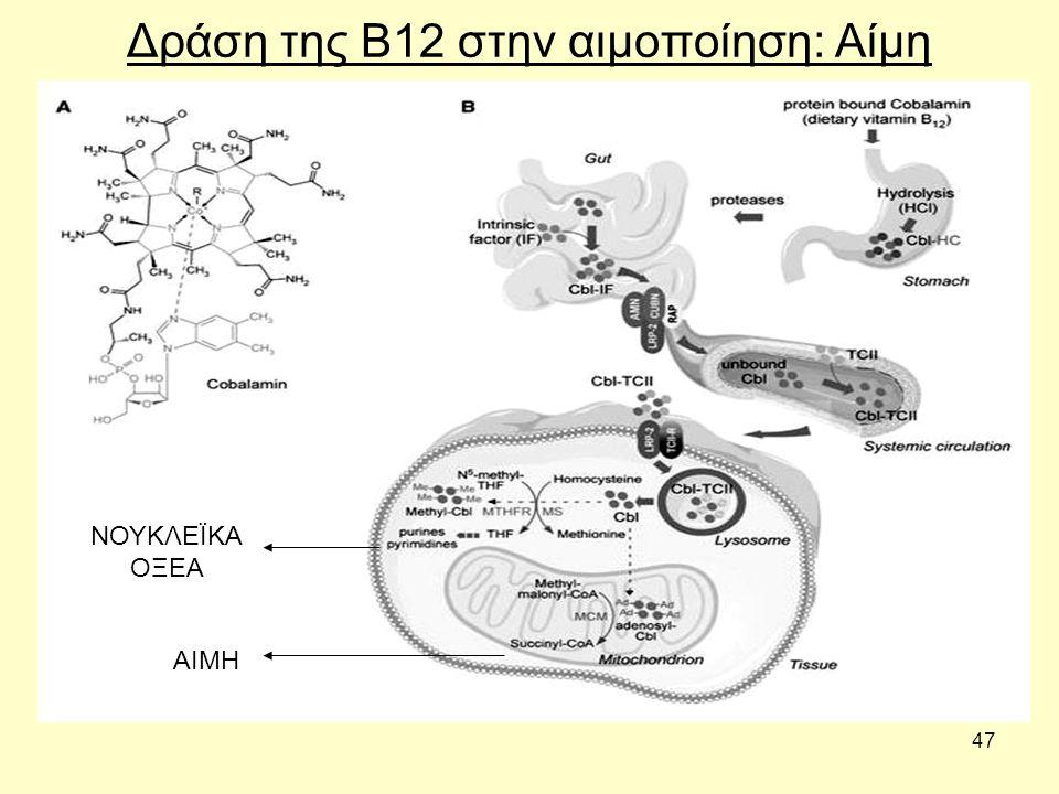 47 Δράση της Β12 στην αιμοποίηση: Αίμη AIMH ΝΟΥΚΛΕΪΚΑ ΟΞΕΑ