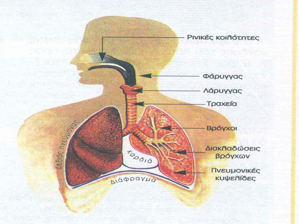 ΔΙΔΑΣΚΑΛΙΑ ΑΡΡΩΣΤΟΥ & ΟΙΚΟΓΕΝΕΙΑΣ Να φροντίζει συχνά την στοματική κοιλότητα