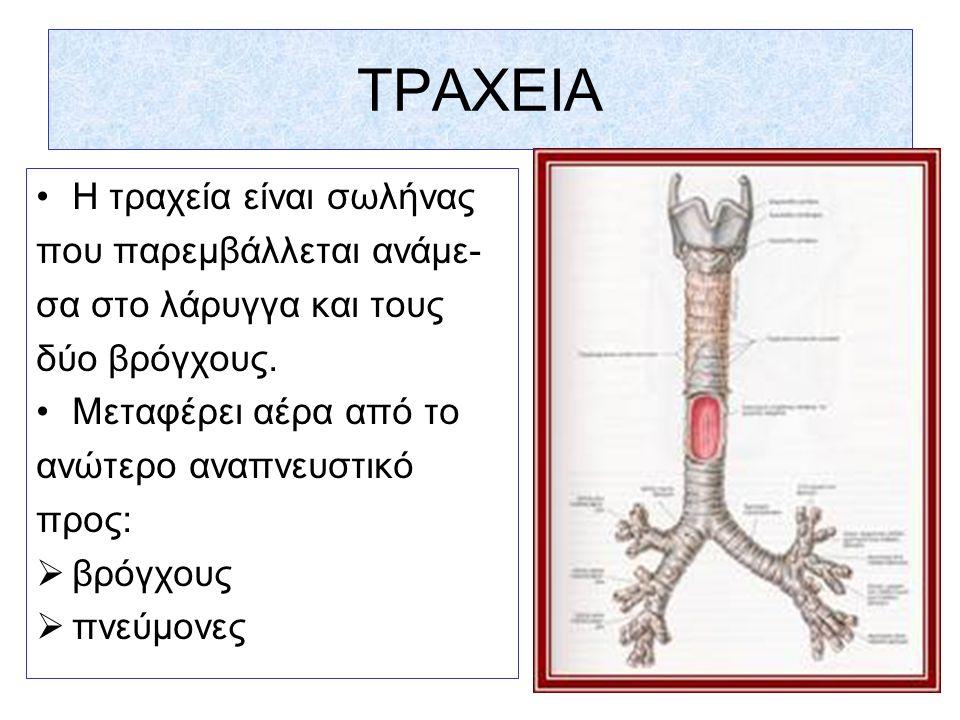 ΤΡΑΧΕΙΟΣΤΟΜΙΑ Ονομάζεται η εχγειρητική διάνοιξη της τραχείας και η τοποθέτηση ειδικού σωλήνα εντός αυτής, με σκοπό τον αερισμό του ασθενούς, παρακά- πτοντας την ανώτερη αναπνευστική οδό.