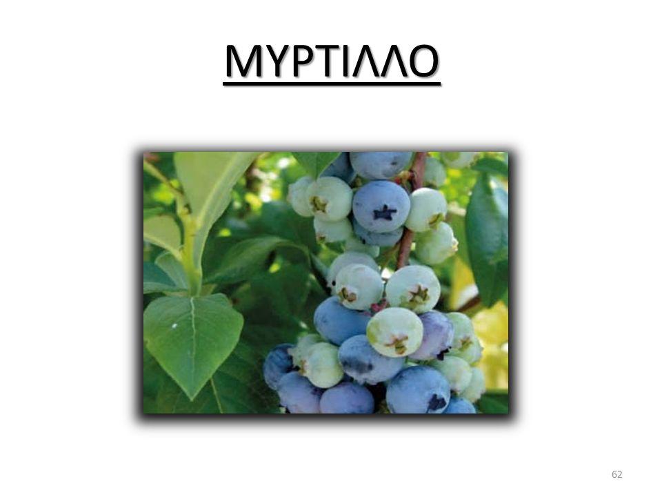 ΜΥΡΤΙΛΛΟ 62