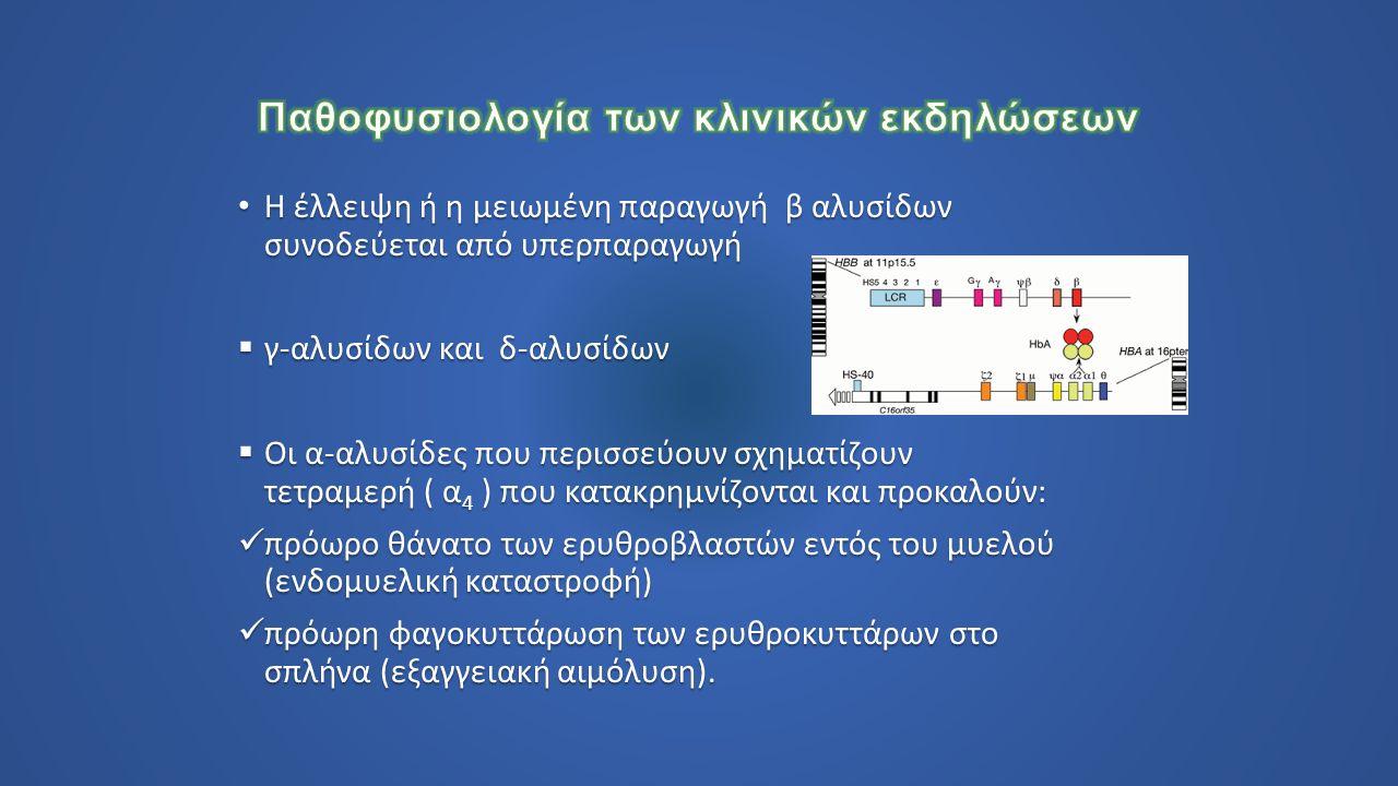 Η έλλειψη ή η μειωμένη παραγωγή β αλυσίδων συνοδεύεται από υπερπαραγωγή Η έλλειψη ή η μειωμένη παραγωγή β αλυσίδων συνοδεύεται από υπερπαραγωγή  γ-αλυσίδων και δ-αλυσίδων  Οι α-αλυσίδες που περισσεύουν σχηματίζουν τετραμερή ( α 4 ) που κατακρημνίζονται και προκαλούν: πρόωρο θάνατο των ερυθροβλαστών εντός του μυελού (ενδομυελική καταστροφή) πρόωρο θάνατο των ερυθροβλαστών εντός του μυελού (ενδομυελική καταστροφή) πρόωρη φαγοκυττάρωση των ερυθροκυττάρων στο σπλήνα (εξαγγειακή αιμόλυση).