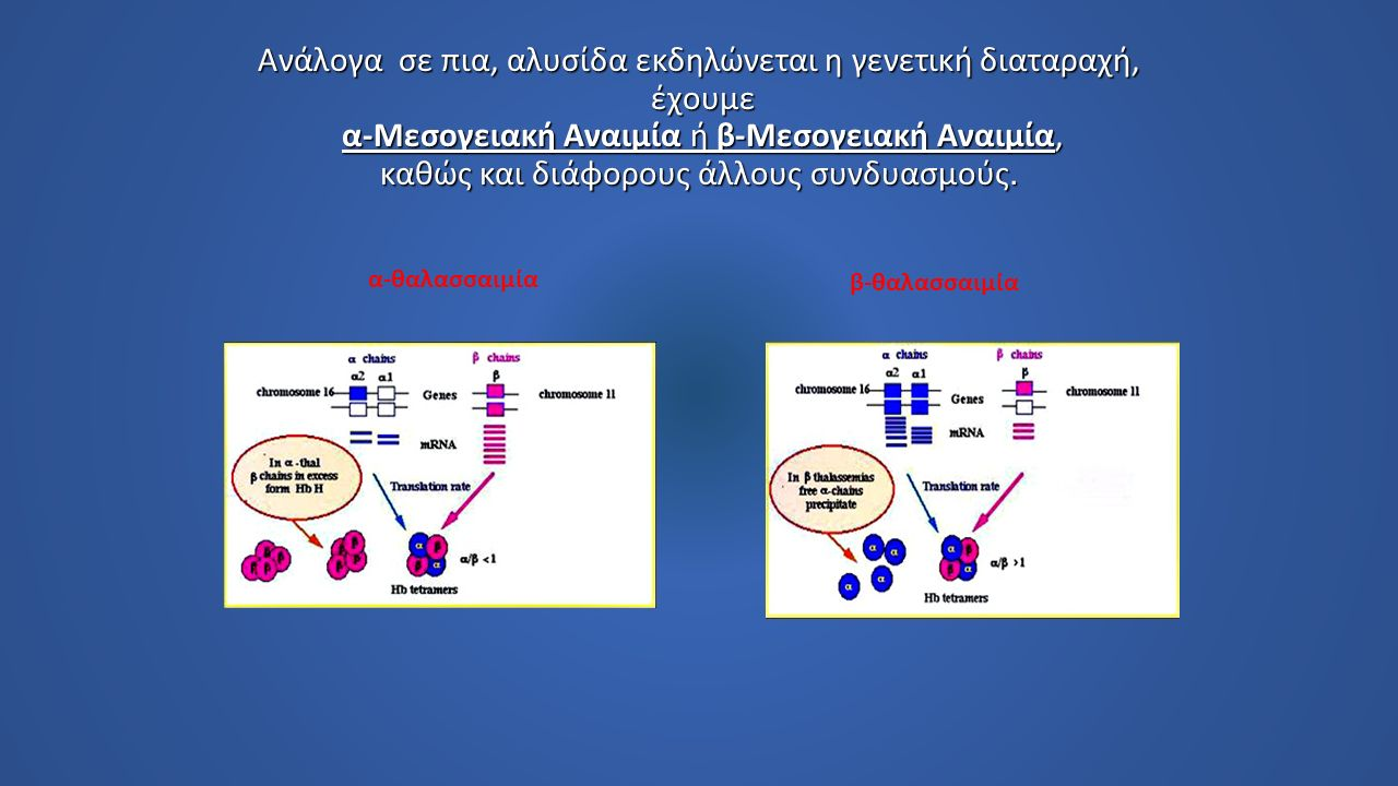 Οι α-θαλασσαιμίες είναι κληρονομικά νοσήματα που χαρακτηρίζονται από ανεπαρκή ή πλήρη έλλειψη της παραγωγής της α σφαιρίνης και αυξημένης παραγωγής των β αλύσων.