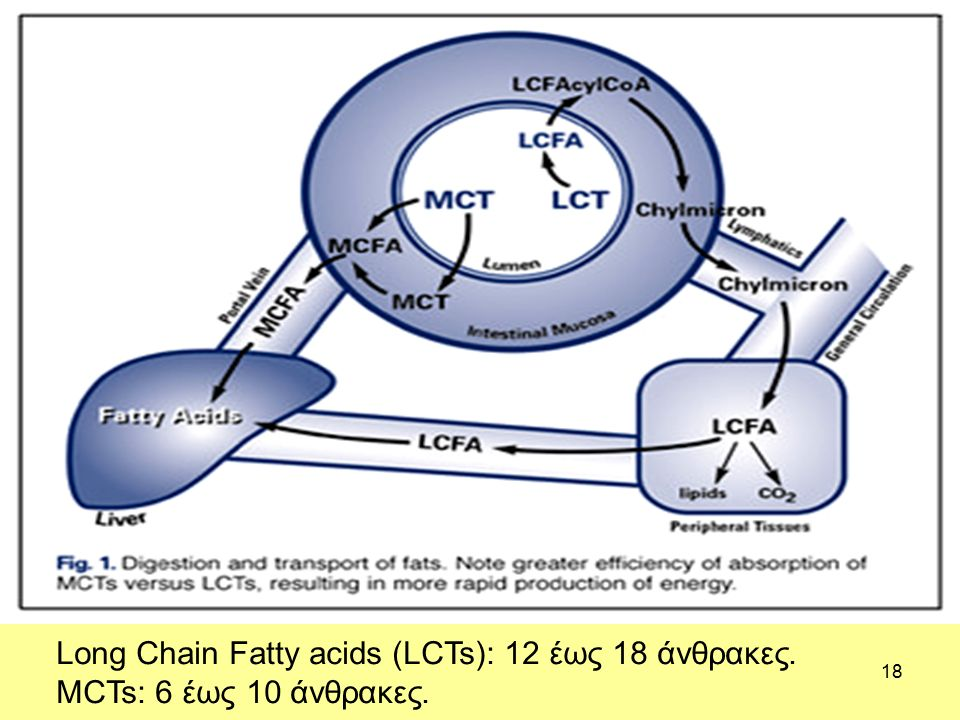 18 Long Chain Fatty acids (LCTs): 12 έως 18 άνθρακες. MCTs: 6 έως 10 άνθρακες.