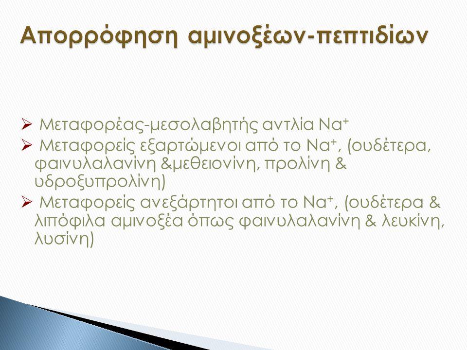  Μεταφορέας-μεσολαβητής αντλία Νa +  Μεταφορείς εξαρτώμενοι από το Νa +, (ουδέτερα, φαινυλαλανίνη &μεθειονίνη, προλίνη & υδροξυπρολίνη)  Μεταφορείς ανεξάρτητοι από το Νa +, (ουδέτερα & λιπόφιλα αμινοξέα όπως φαινυλαλανίνη & λευκίνη, λυσίνη)