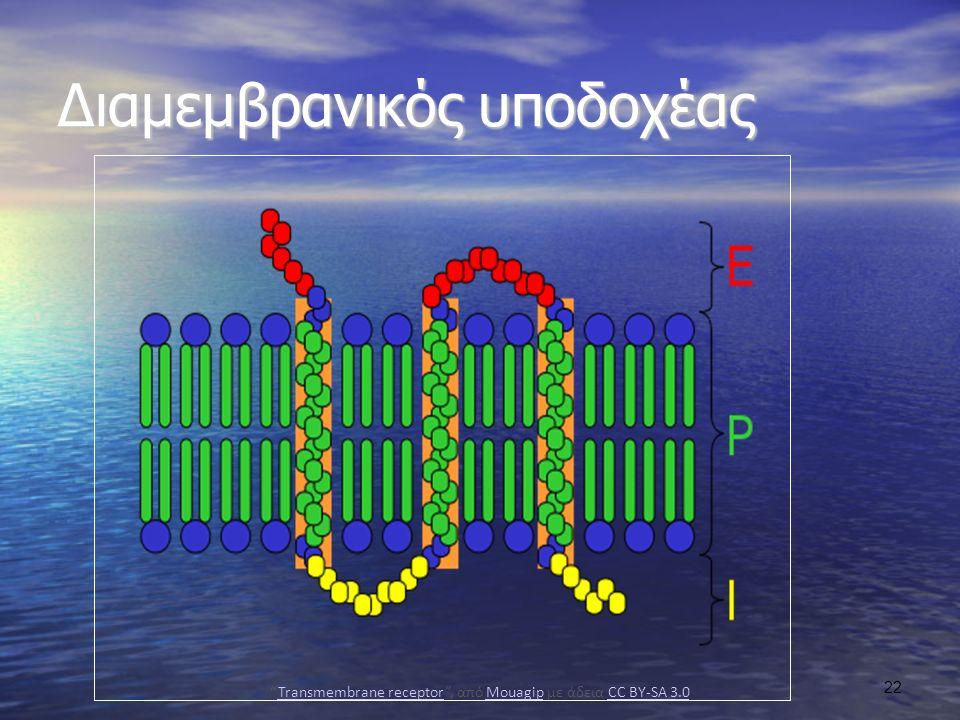 Διαμεμβρανικός υποδοχέας Transmembrane receptor , από Mouagip με άδεια CC BY-SA 3.0Transmembrane receptorMouagipCC BY-SA 3.0 22