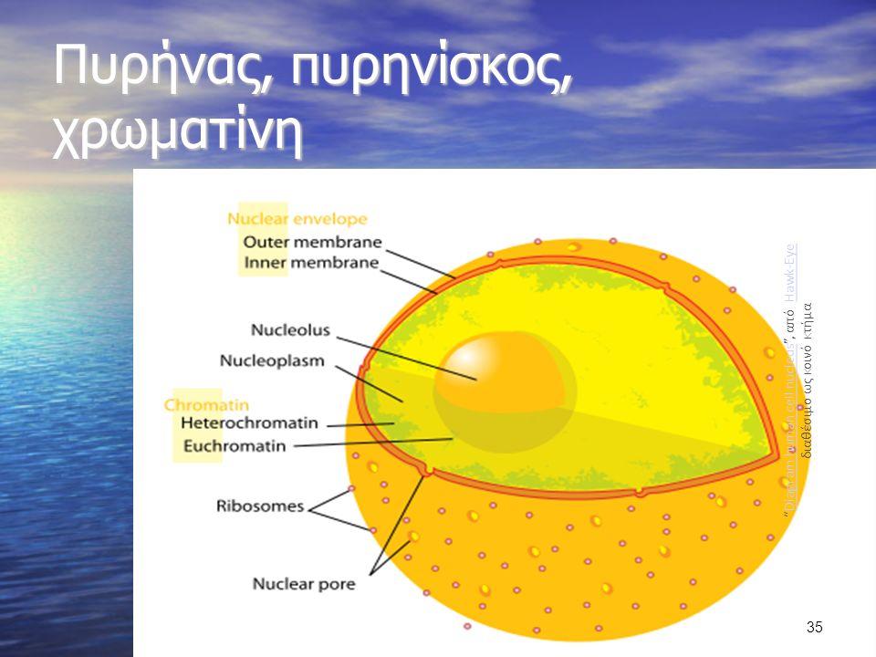 Πυρήνας, πυρηνίσκος, χρωματίνη Diagram human cell nucleus , από Hawk-Eye διαθέσιμο ως κοινό κτήμαDiagram human cell nucleusHawk-Eye 35