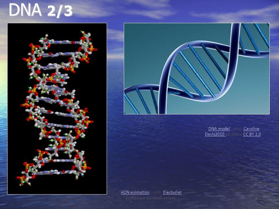 DNA 2/3 ADN animation , από Elecbullet διαθέσιμο ως κοινό κτήμαADN animationElecbullet DNA model , από Caroline Davis2010 με άδεια CC BY 2.0DNA modelCaroline Davis2010 CC BY 2.0 37