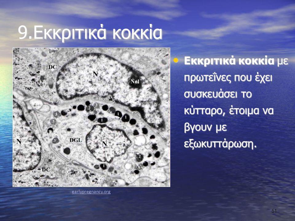 9.Εκκριτικά κοκκία Εκκριτικά κοκκία με πρωτεΐνες που έχει συσκευάσει το κύτταρο, έτοιμα να βγουν με εξωκυττάρωση.