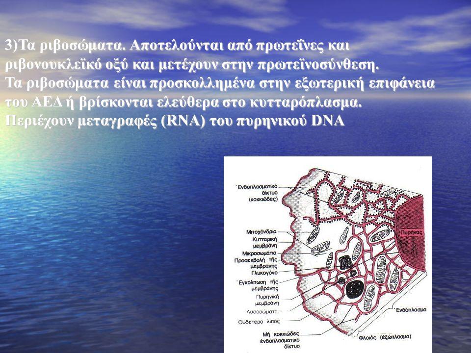 3)Τα ριβοσώματα.