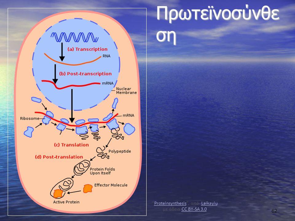 Πρωτεϊνοσύνθε ση Proteinsynthesis , από Laikayiu με άδεια CC BY-SA 3.0ProteinsynthesisLaikayiuCC BY-SA 3.0 62