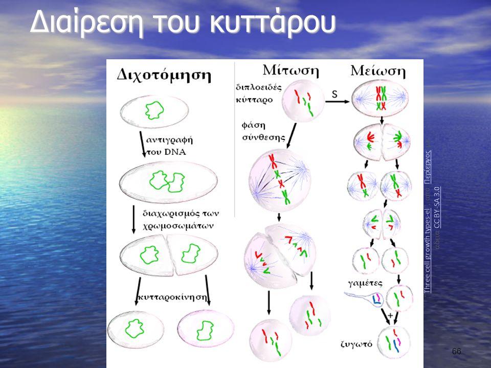 Διαίρεση του κυττάρου Three cell growth types-el , από Περίεργος με άδεια CC BY-SA 3.0Three cell growth types-elΠερίεργοςCC BY-SA 3.0 66
