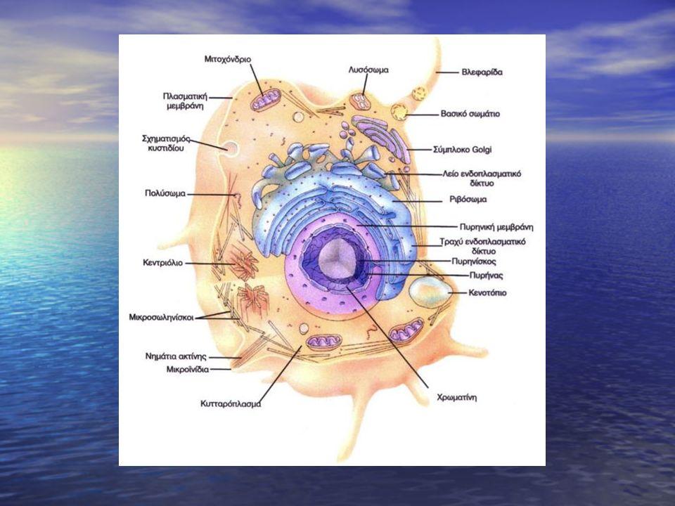 Υδατάνθρακες της μεμβράνης: Απαντώνται σχεδόν αποκλειστικά στην εξωτερική επιφάνεια.
